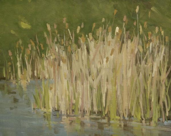 Ely Springs Cattails